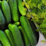 Cucumber Nutrition and Benefits