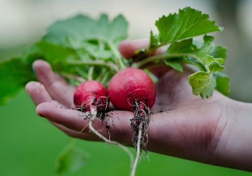 How to become environmentally friendly-Go Organic