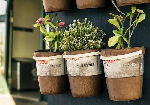 How to become environmentally friendly - Grow a Garden